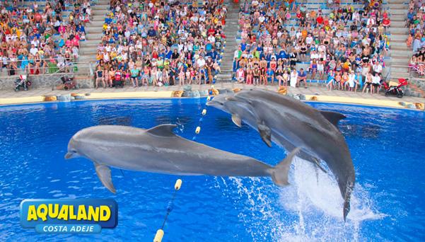 Dolphinarium aqualand costa adeje - Aqua tenerife ...