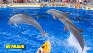 Aqualand-CostaAdeje-Show-Delfines-03