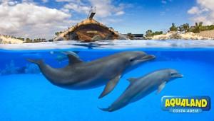 Aqualand-CostaAdeje-Show-Delfines-10